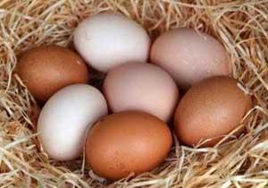 Цельные яйца увеличивают мышечную массу
