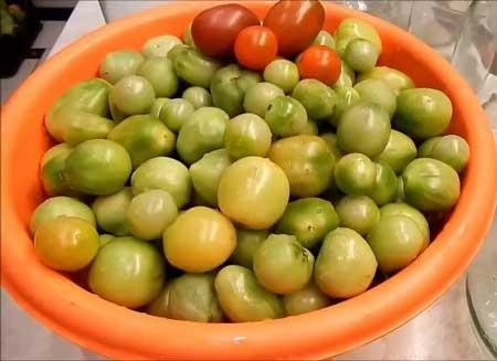 Не зрелые помидоры
