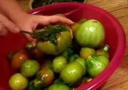 Начинка для помидор